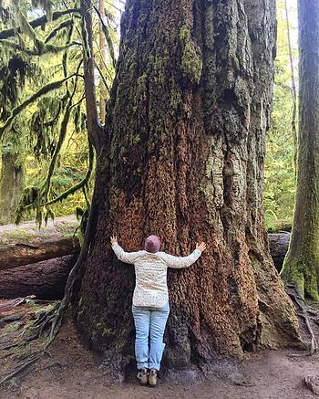 Hug A Tree!
