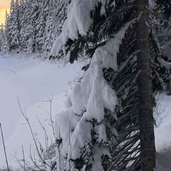 BeWild Adventures Garibaldi Lake Snowshoe