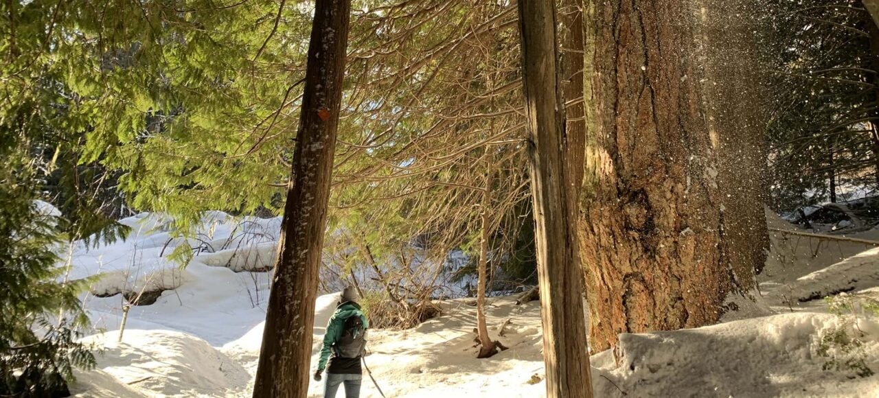 Cheakamus winter hike