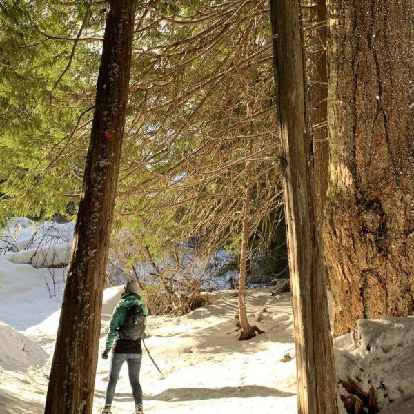 Cheakamus winter hike