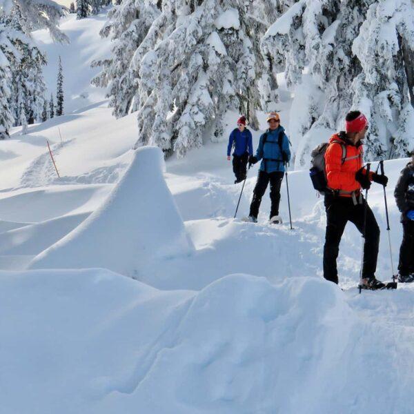 11BeWild Adventures Elfin Lakes Winter Snowshoe