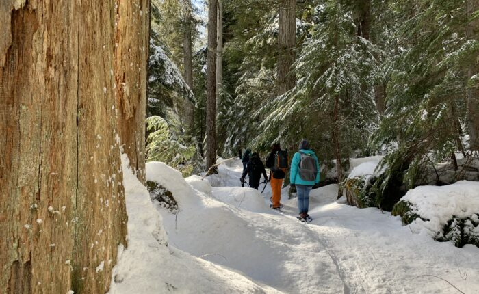 BeWild Adventures Cheakamus Lake Snowshoe