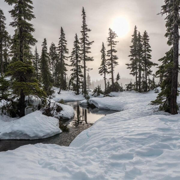 Snowy landscape in British Columbia perfect for snowshoeing