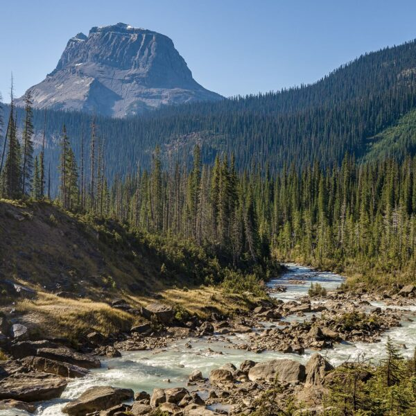 Alpine forest and river in British Columbia